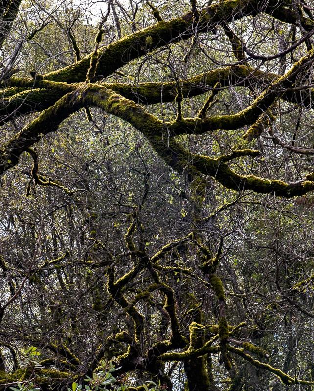 trees-1-10.jpg