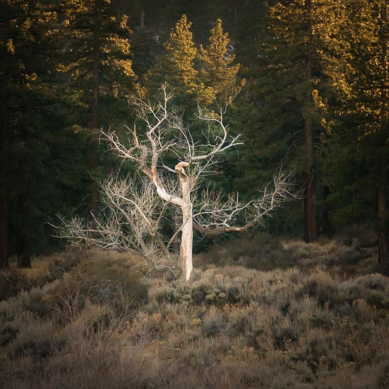 trees-1-3.jpg