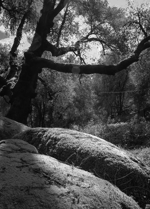 trees-1-9.jpg