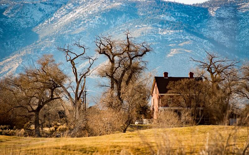 trees-2309.jpg