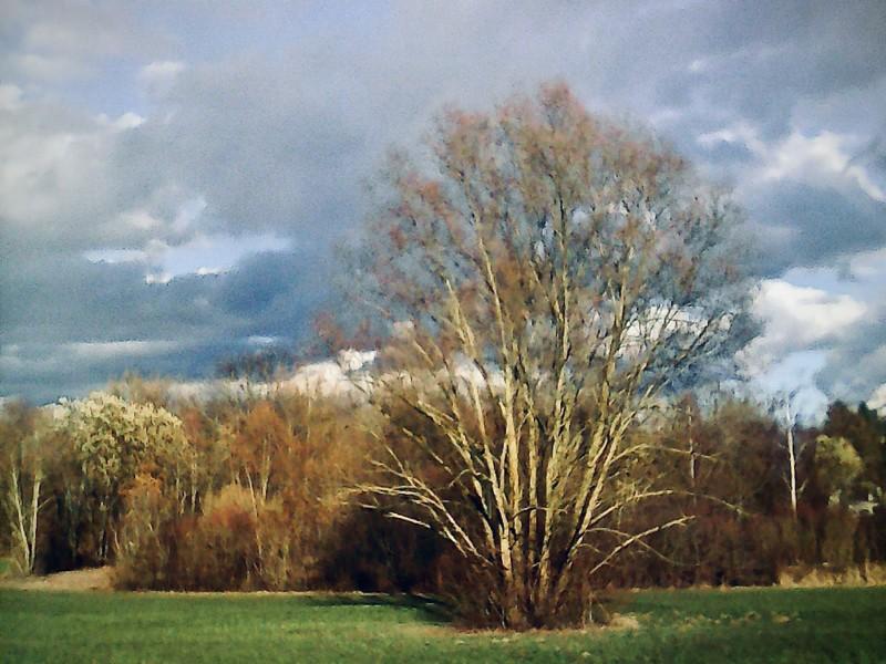 Trees at Rederzhausen - 1.jpg