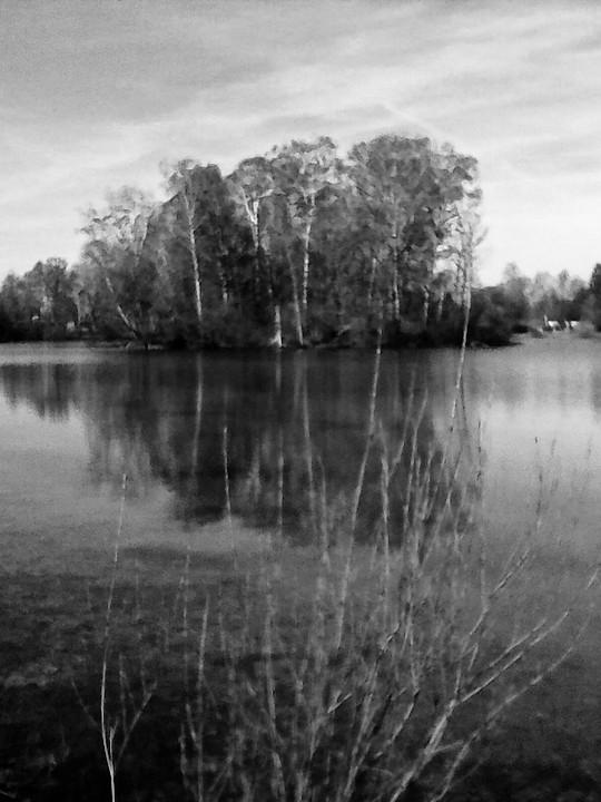 trees autobahnsee - 1.jpg