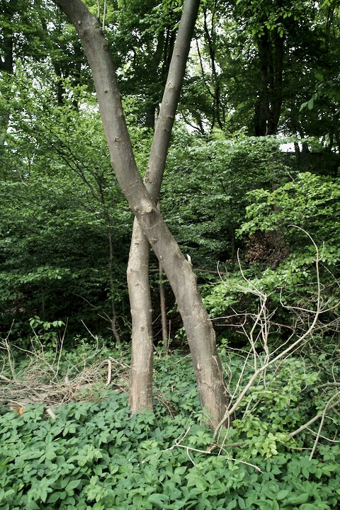 trees mark the spot - 1.jpg