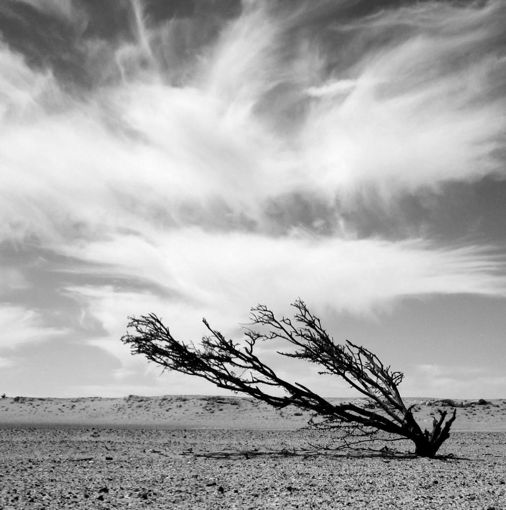 treesmall1.jpg