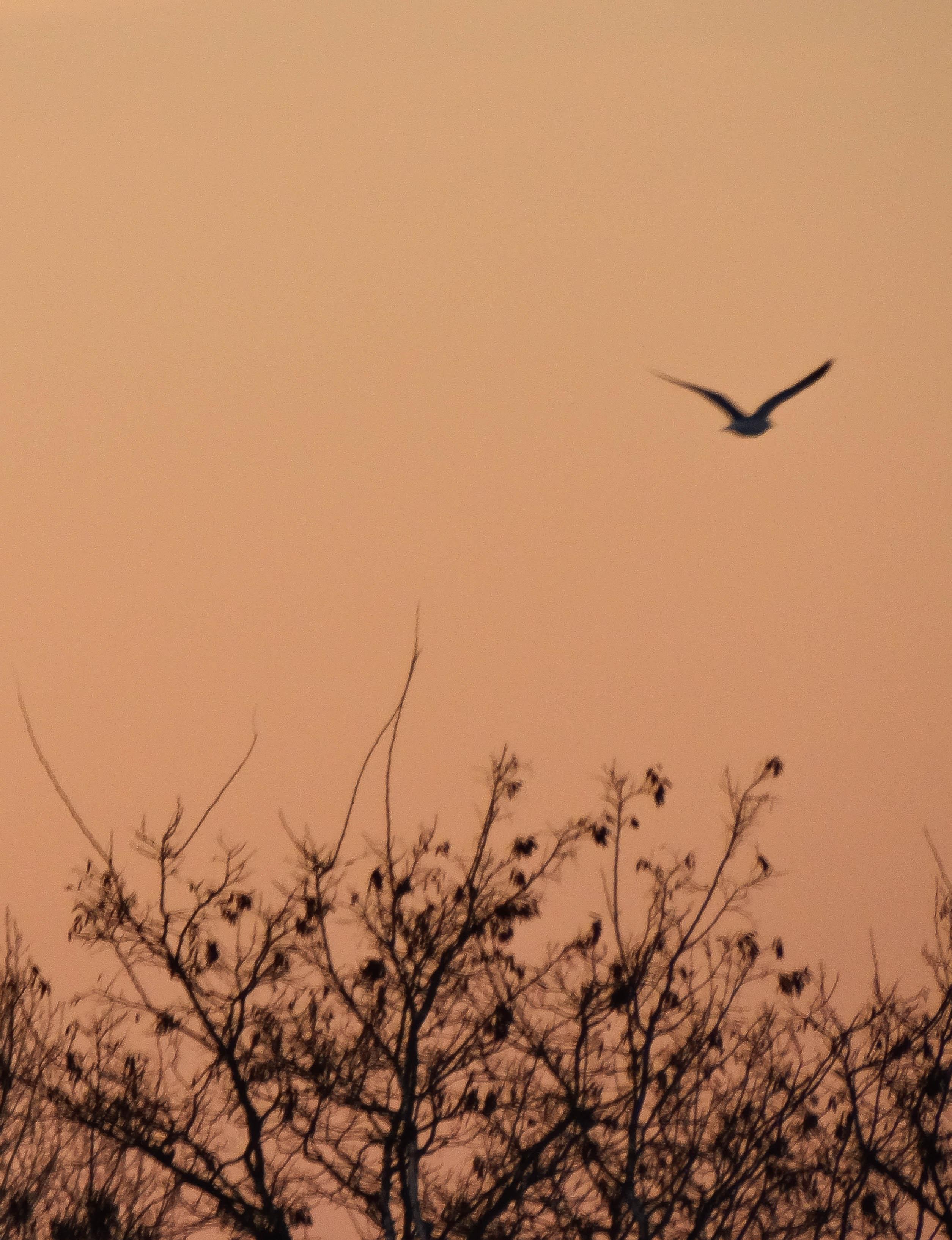 twilight 027.jpg