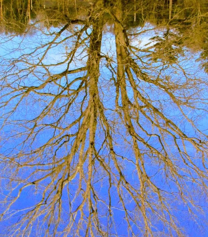 Upsidedowntree.JPG