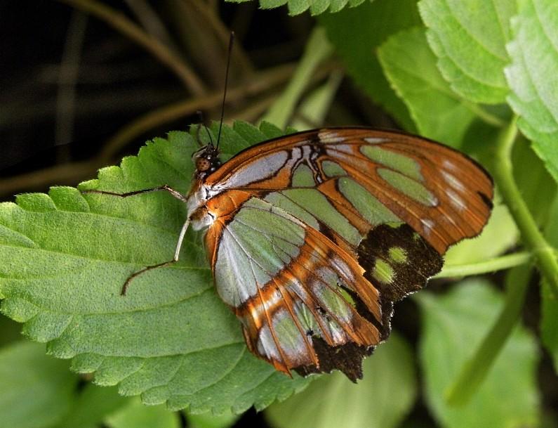 vlinder1-comp.jpg