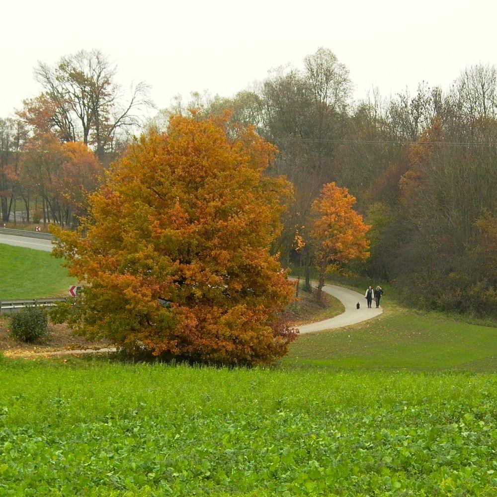 walkers & trees.jpg