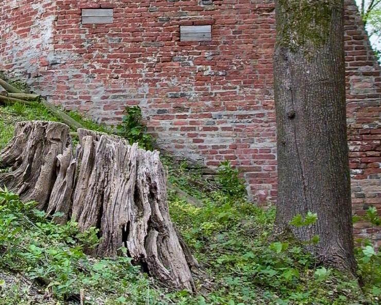 wall&treedetail - 1 (1).jpg