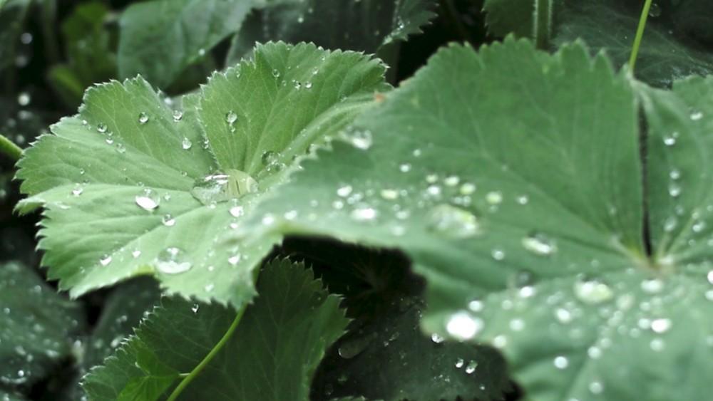 water drops - 1.jpg