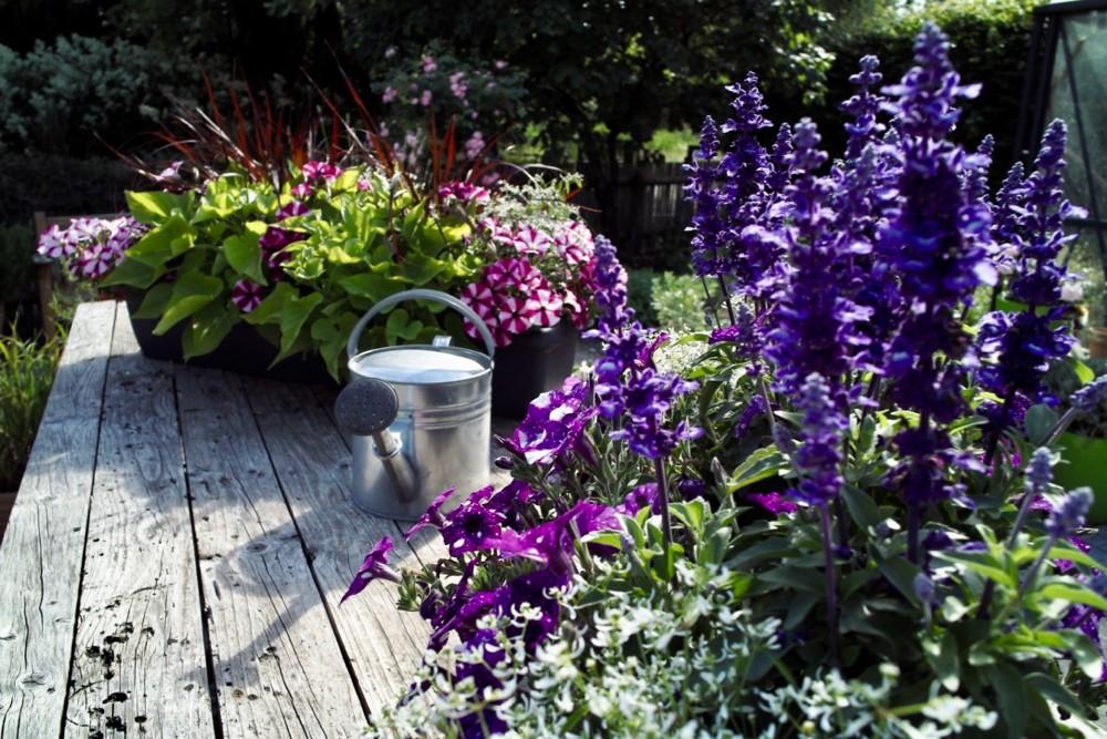 watering can - 1.jpg