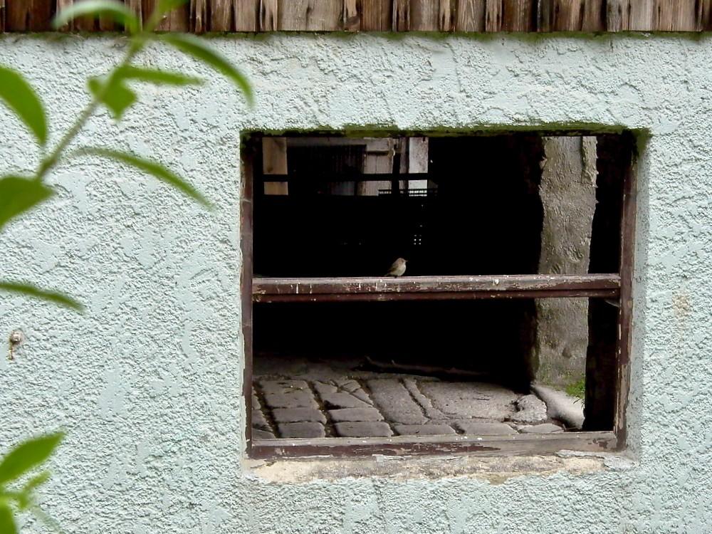 window seat - 1.jpg
