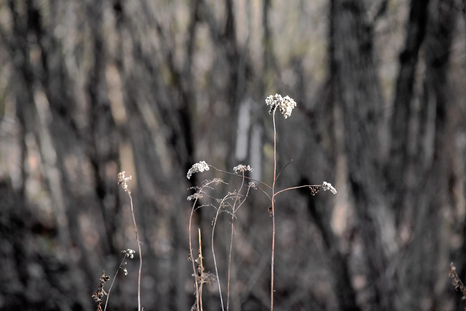 winter weed_2835.jpeg