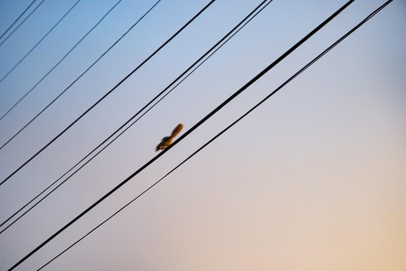 wires-1.jpg