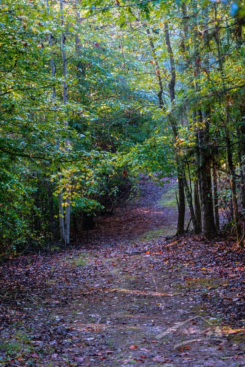 woods walk09222018_144.jpg