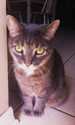 $cat1.jpg