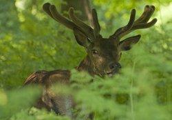 $Deer web 14.jpg