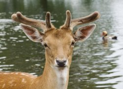 $Deer Water web .jpg