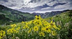$wildflowers_KSL_s_zpsb578d0f6.jpg