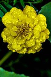 $flower.jpg