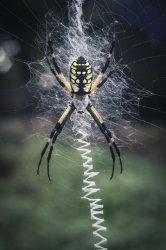 $Spider2.JPG
