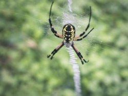 $Spider6.JPG