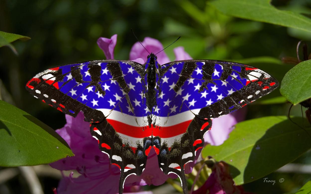 Картинки самых редких бабочек