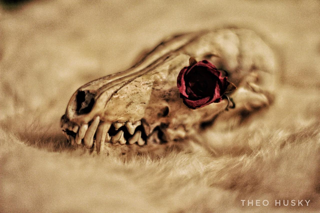 Dead Rose 1