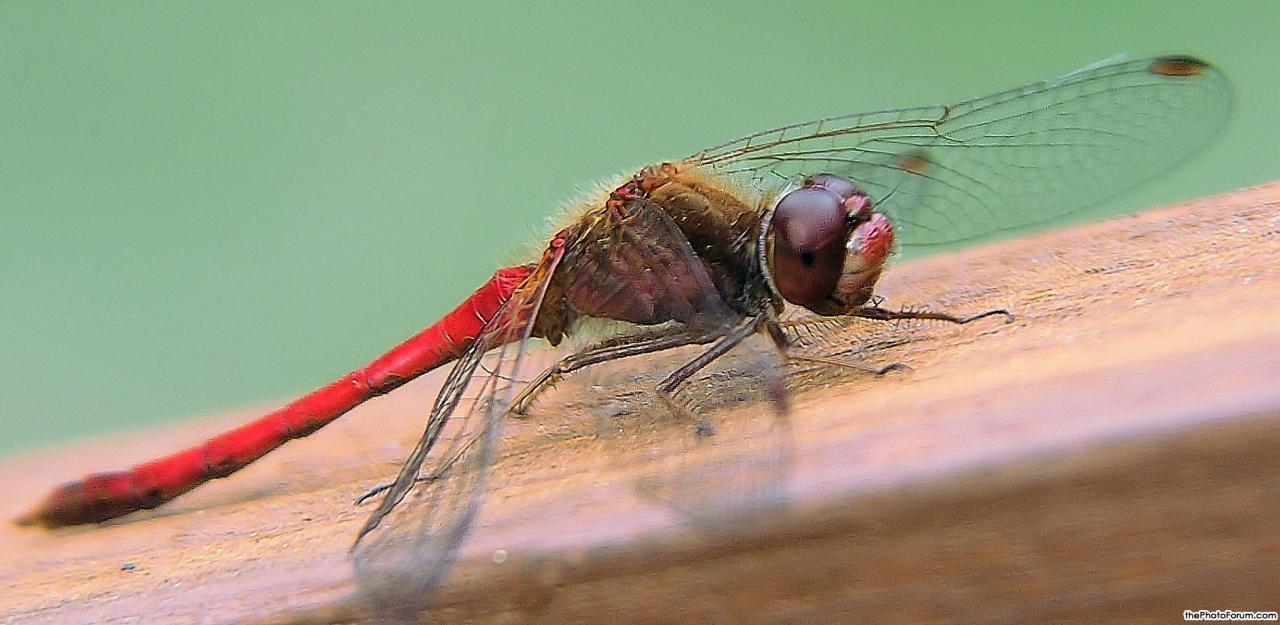 redragonfly3