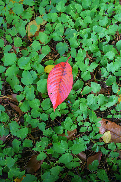 Oct'09 - Autumn Series #1