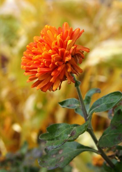 Oct'09 - Autumn Series #2