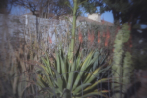 TWX's pinhole photos